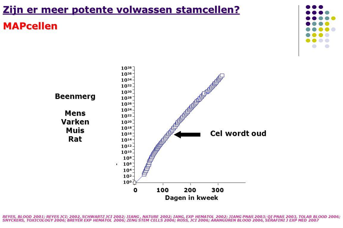 Zijn er meer potente volwassen stamcellen MAPcellen