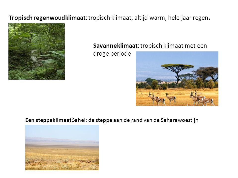 Savanneklimaat: tropisch klimaat met een droge periode