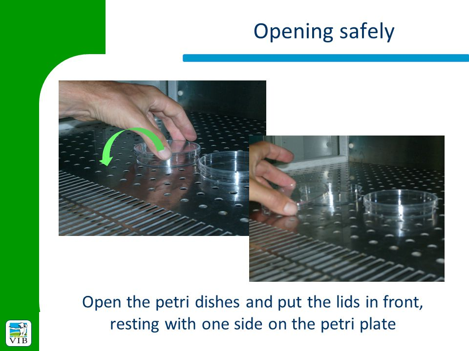 Opening safely Open the petri dishes and put the lids in front, resting with one side on the petri plate.