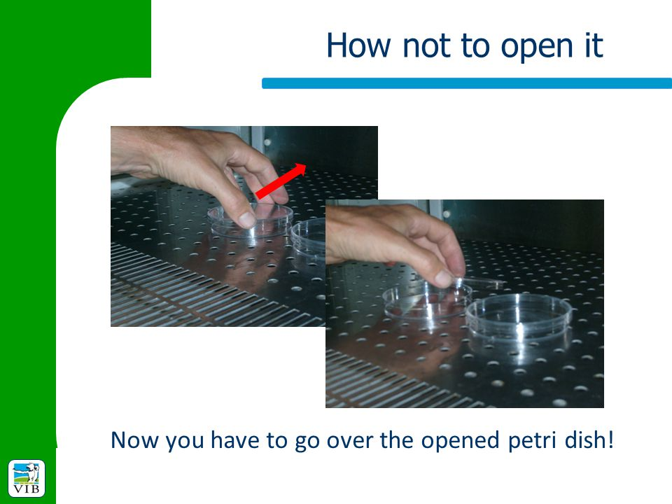 Now you have to go over the opened petri dish!