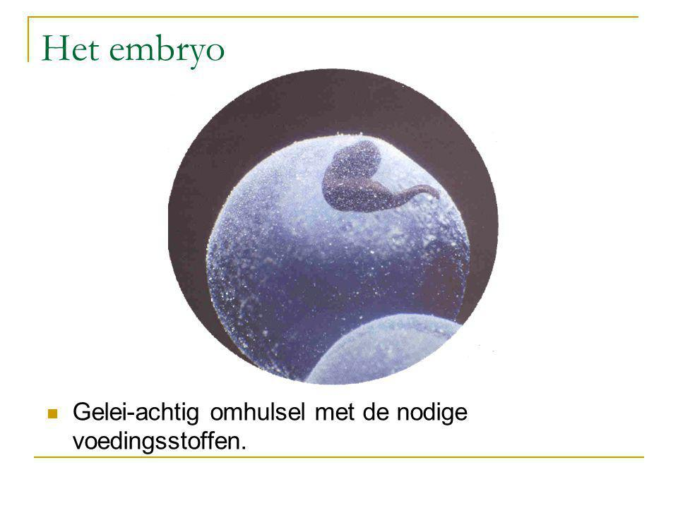 Het embryo Gelei-achtig omhulsel met de nodige voedingsstoffen.