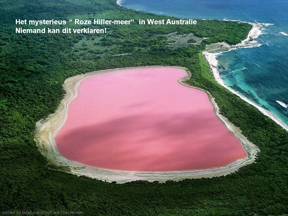 Het mysterieus Roze Hiller-meer in West Australie