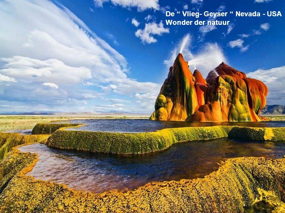 De Vlieg- Geyser Nevada - USA
