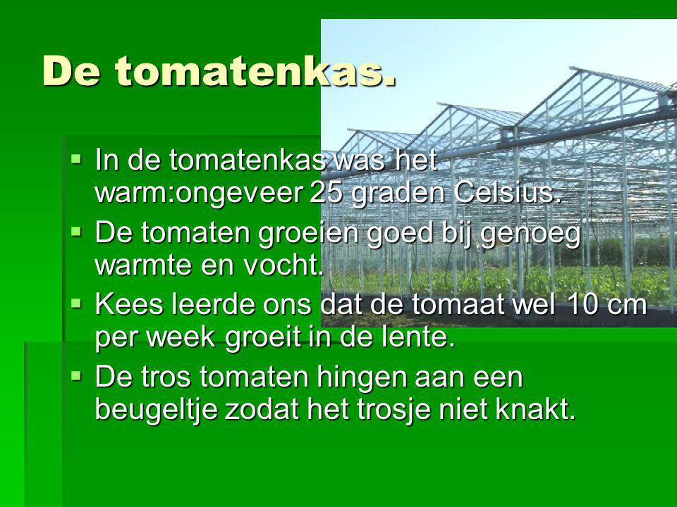 De tomatenkas. In de tomatenkas was het warm:ongeveer 25 graden Celsius. De tomaten groeien goed bij genoeg warmte en vocht.