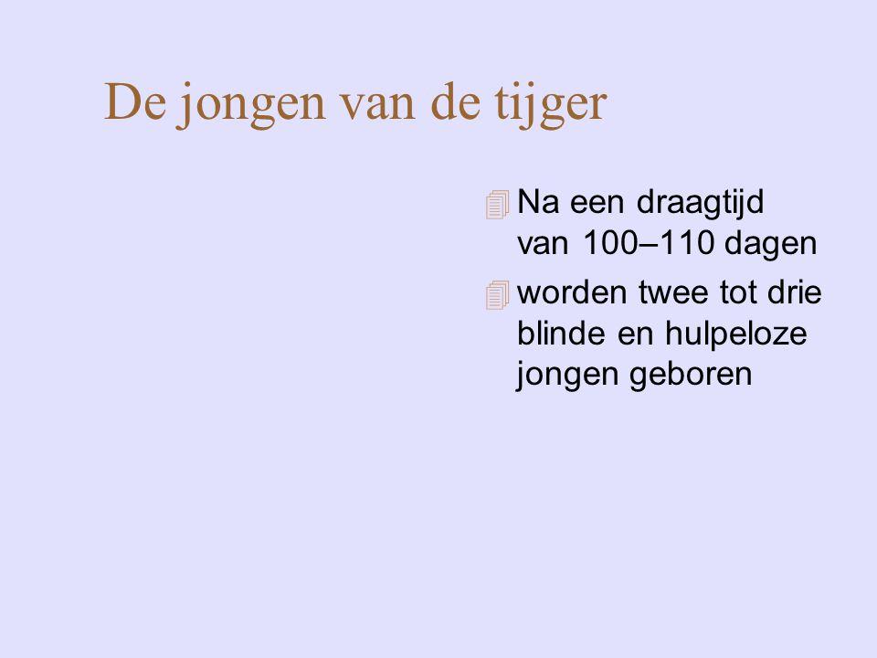 De jongen van de tijger Na een draagtijd van 100–110 dagen