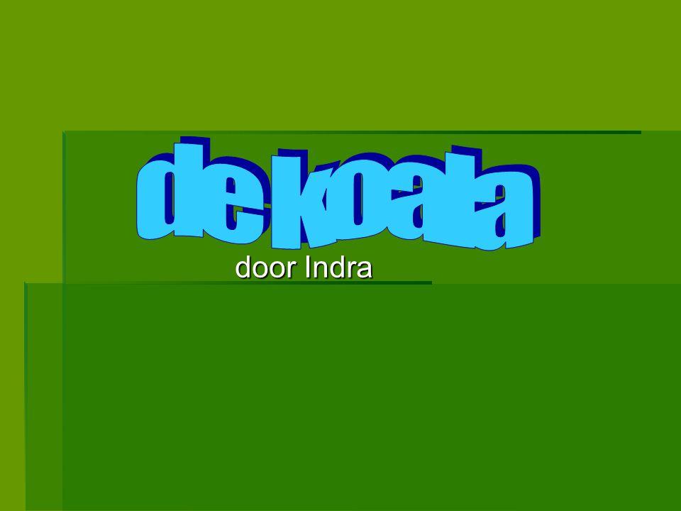 de koala door Indra