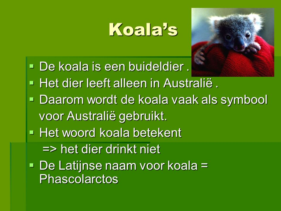 Koala's De koala is een buideldier .