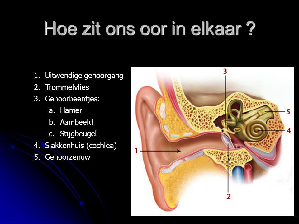 Hoe zit ons oor in elkaar