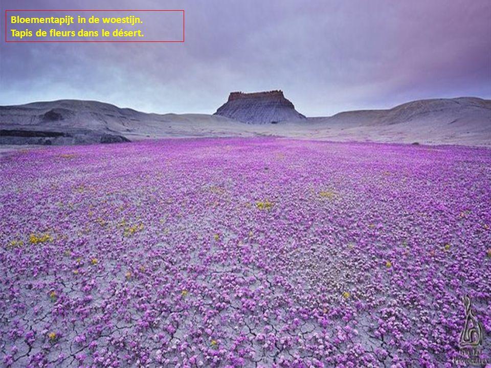 Bloementapijt in de woestijn.