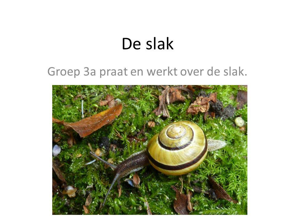 Groep 3a praat en werkt over de slak.