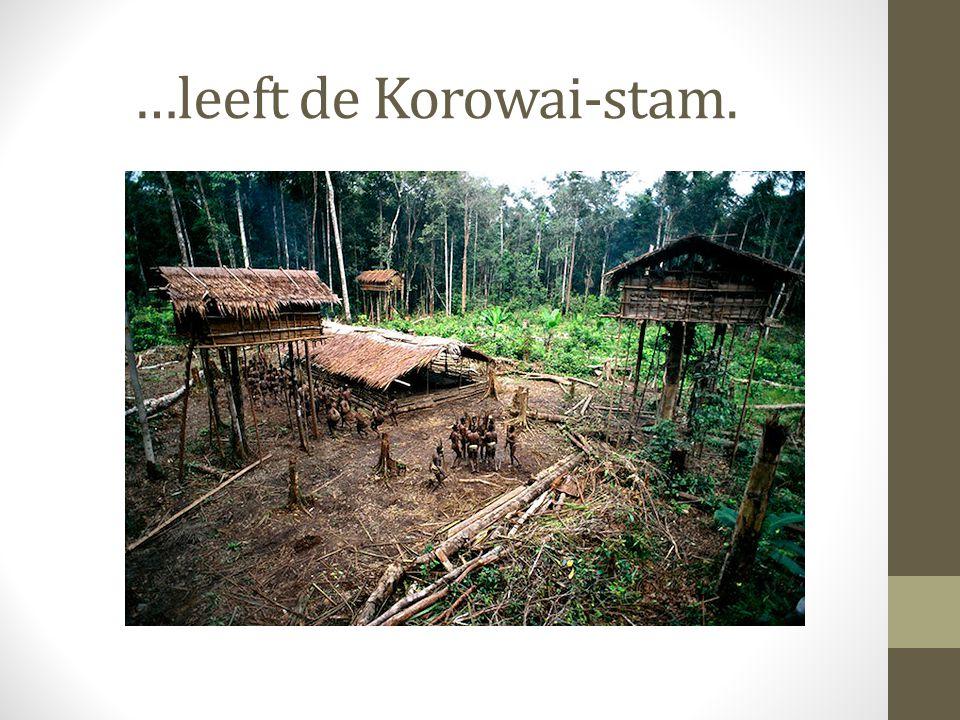 …leeft de Korowai-stam.