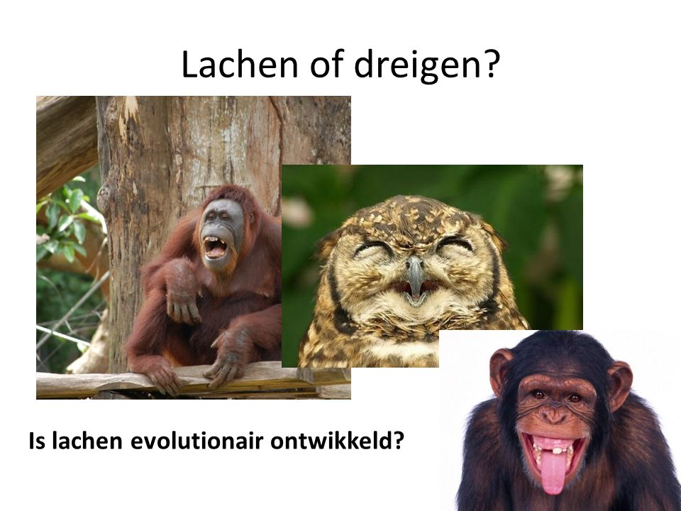 Lachen of dreigen Is lachen evolutionair ontwikkeld