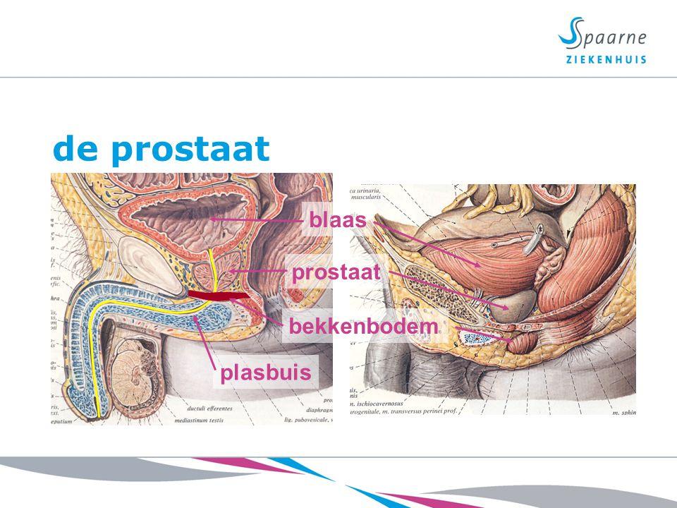 de prostaat blaas plasbuis prostaat bekkenbodem
