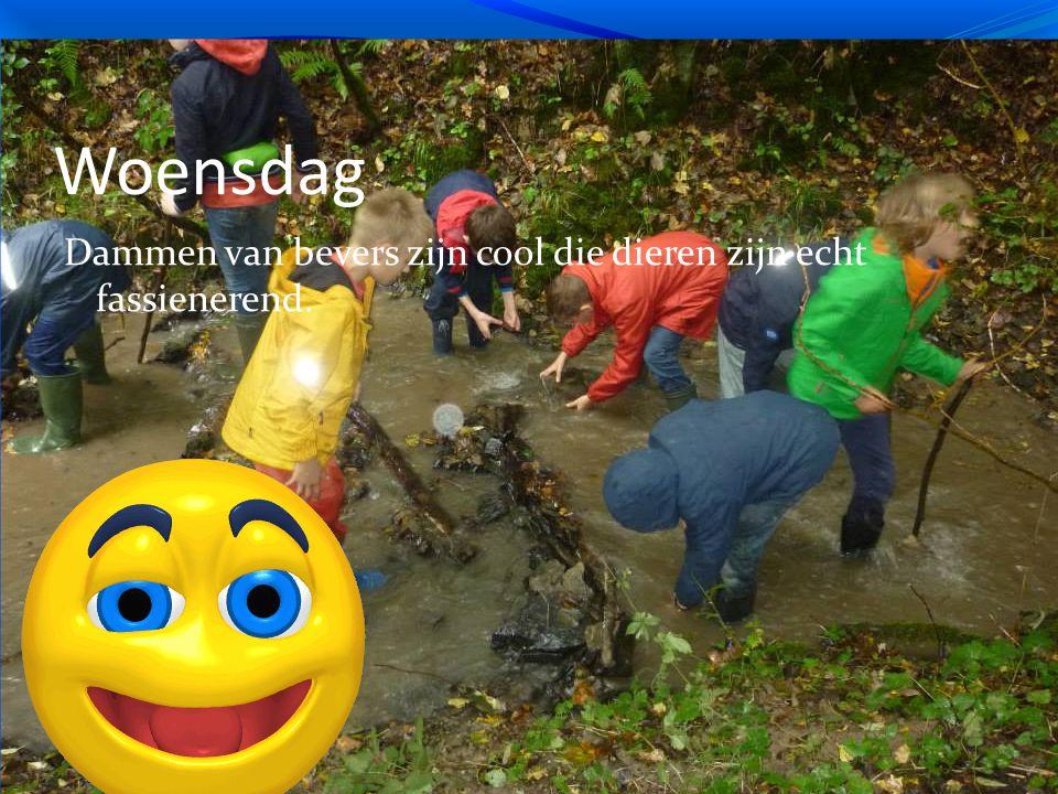 Woensdag Dammen van bevers zijn cool die dieren zijn echt fassienerend.