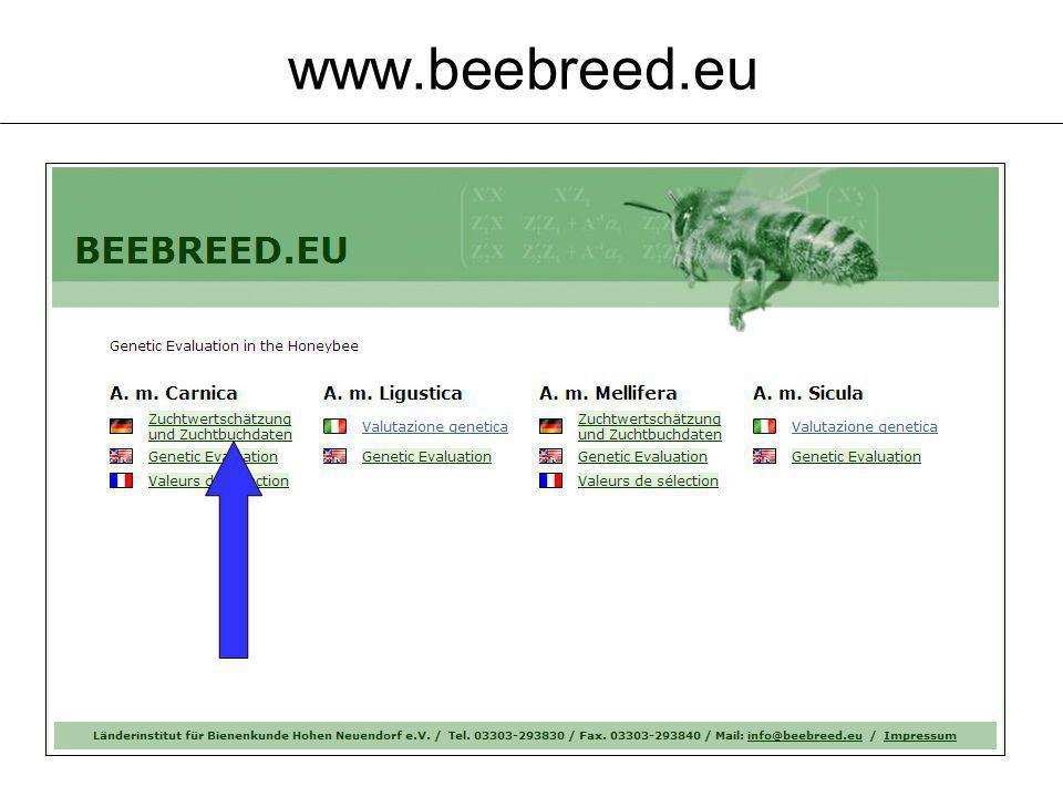 www.beebreed.eu