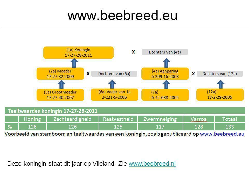 www.beebreed.eu Deze koningin staat dit jaar op Vlieland. Zie www.beebreed.nl