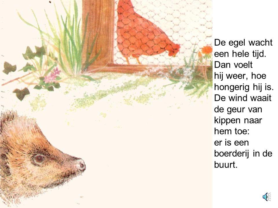 De egel wacht een hele tijd. Dan voelt hij weer, hoe hongerig hij is