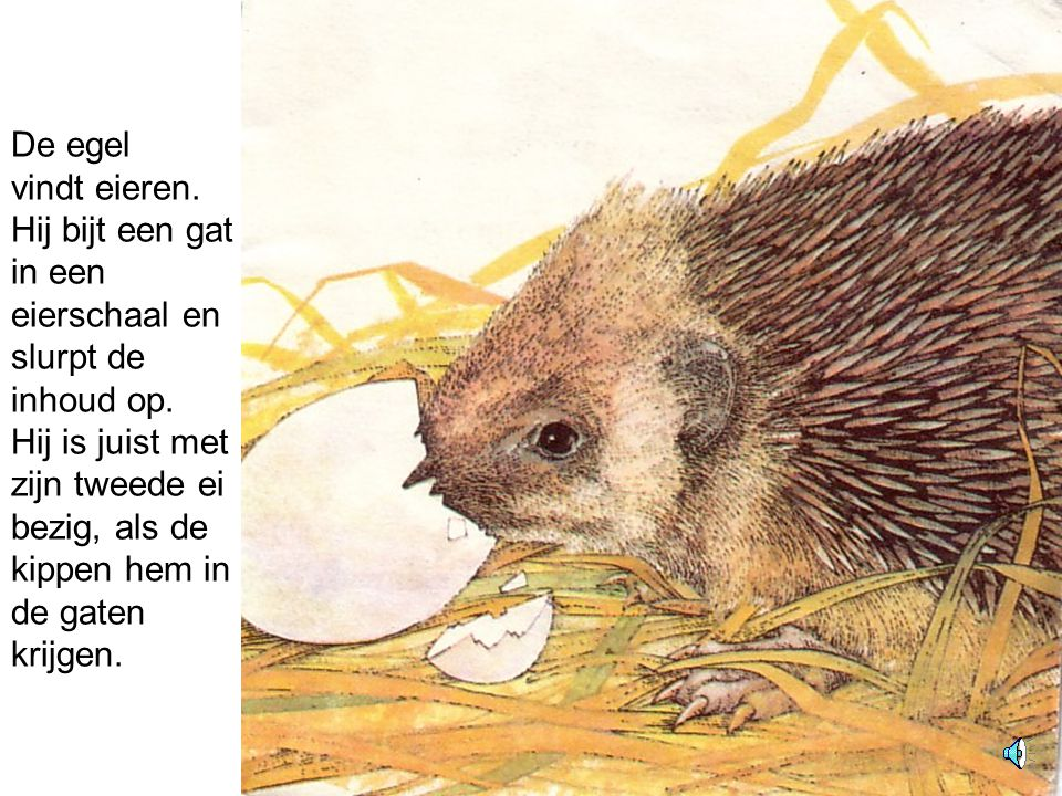 De egel vindt eieren. Hij bijt een gat in een eierschaal en slurpt de inhoud op.