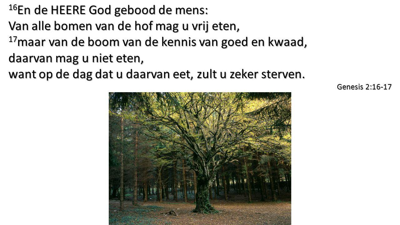 16En de HEERE God gebood de mens: Van alle bomen van de hof mag u vrij eten,