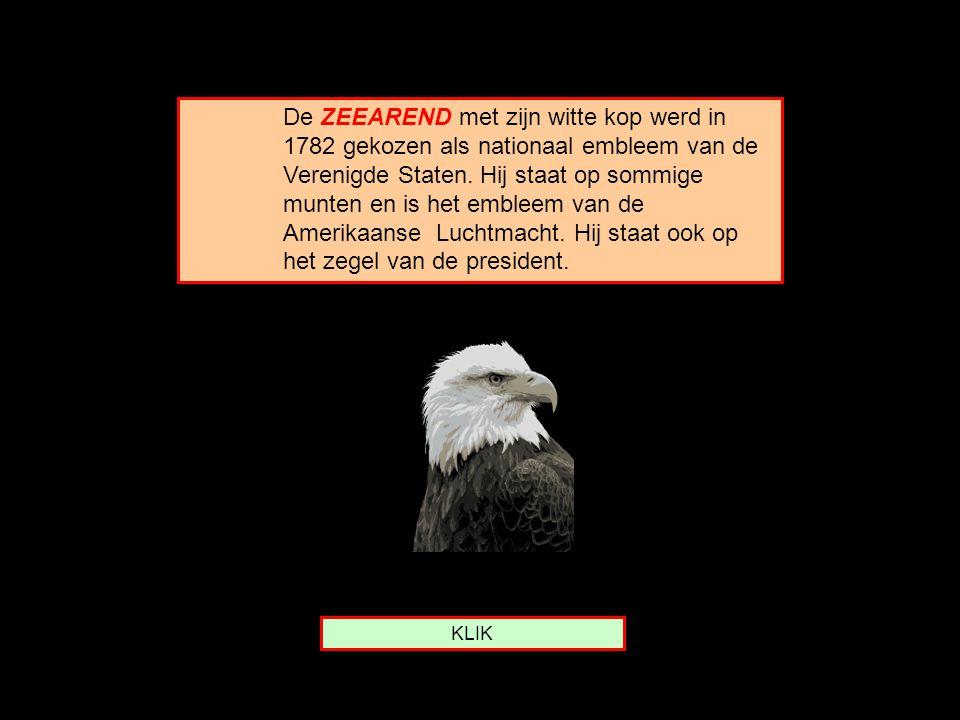 De ZEEAREND met zijn witte kop werd in 1782 gekozen als nationaal embleem van de Verenigde Staten. Hij staat op sommige munten en is het embleem van de Amerikaanse Luchtmacht. Hij staat ook op het zegel van de president.