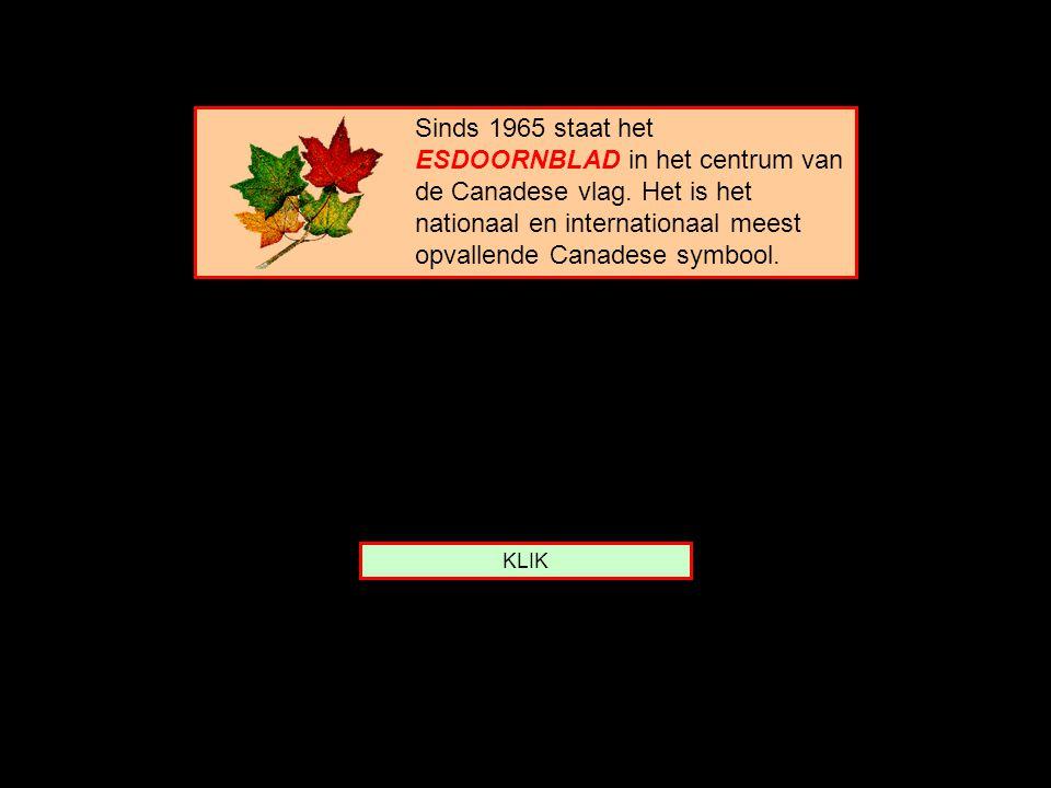 Sinds 1965 staat het ESDOORNBLAD in het centrum van de Canadese vlag