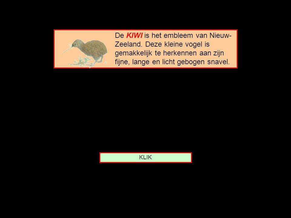 De KIWI is het embleem van Nieuw-Zeeland