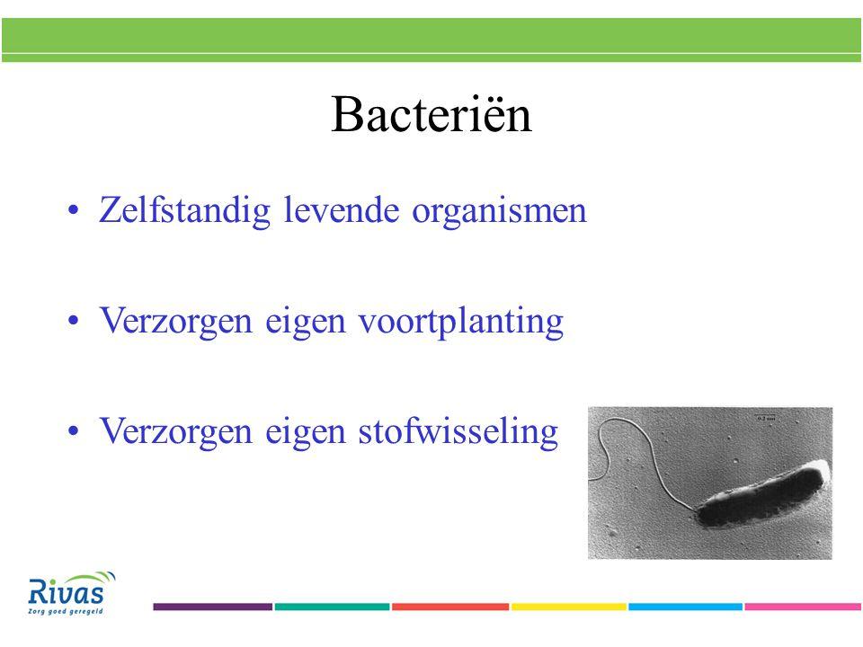 Bacteriën Zelfstandig levende organismen Verzorgen eigen voortplanting