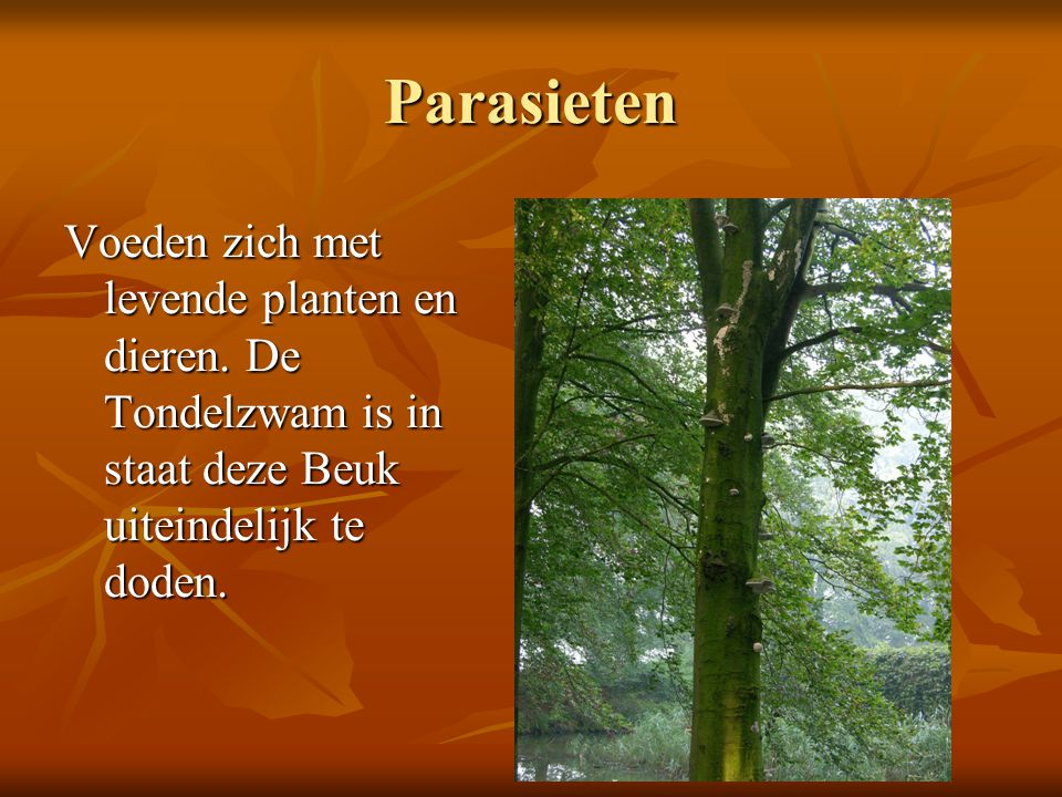 Parasieten Voeden zich met levende planten en dieren.