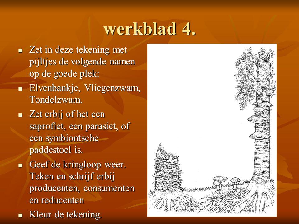 werkblad 4. Zet in deze tekening met pijltjes de volgende namen op de goede plek: Elvenbankje, Vliegenzwam, Tondelzwam.