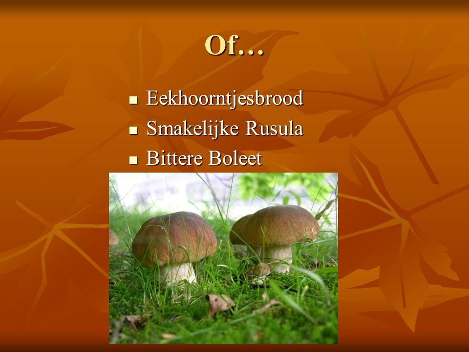 Of… Eekhoorntjesbrood Smakelijke Rusula Bittere Boleet