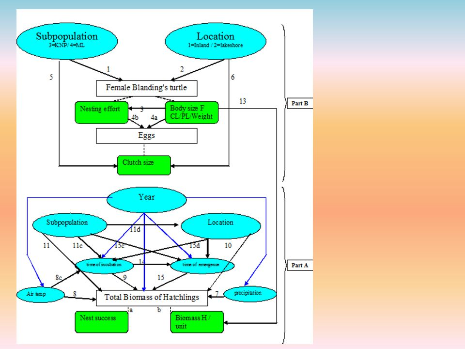 Fg 3: Conceptual model based on Herman et al. , 1995; Herman et al