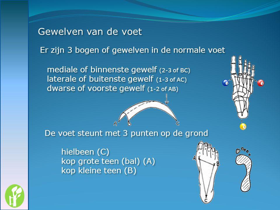 Gewelven van de voet Er zijn 3 bogen of gewelven in de normale voet
