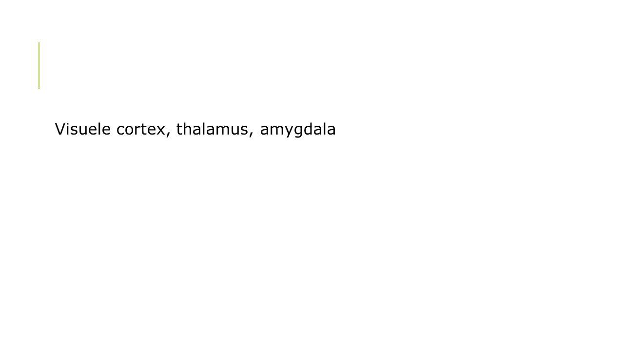 Visuele cortex, thalamus, amygdala