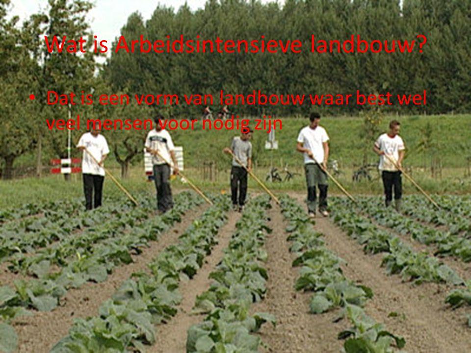 Wat is Arbeidsintensieve landbouw