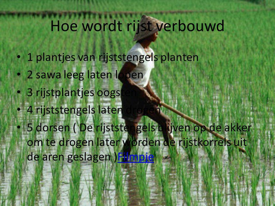 Hoe wordt rijst verbouwd