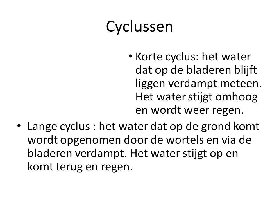 Cyclussen Korte cyclus: het water dat op de bladeren blijft liggen verdampt meteen. Het water stijgt omhoog en wordt weer regen.