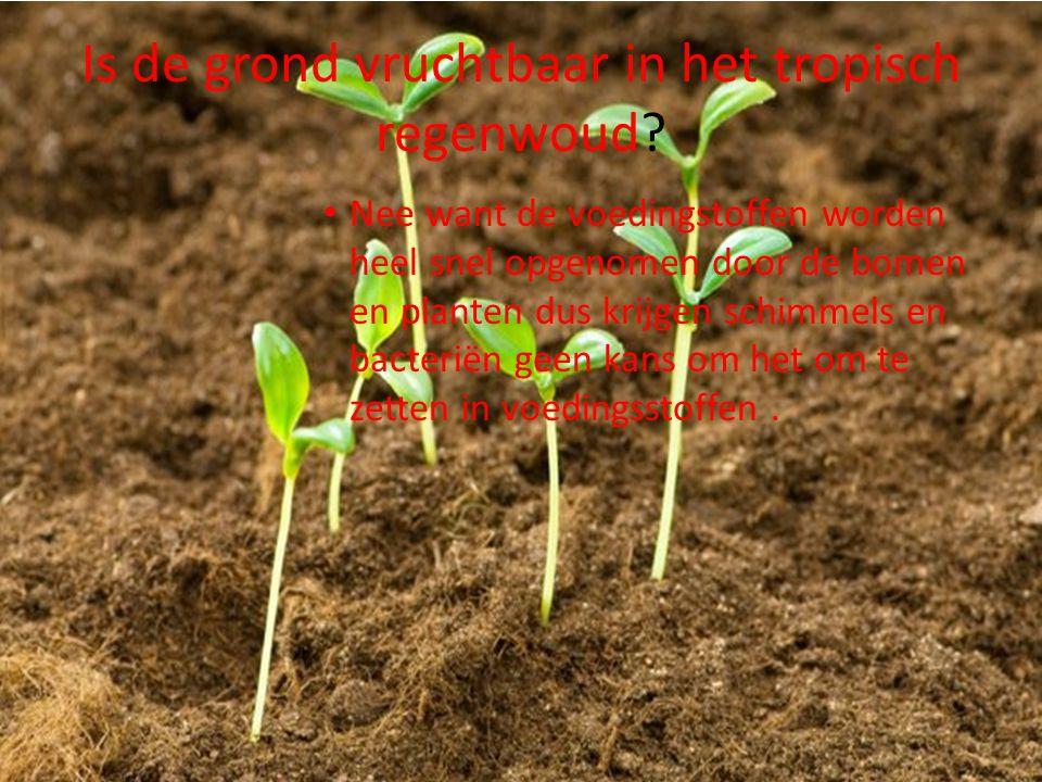 Is de grond vruchtbaar in het tropisch regenwoud