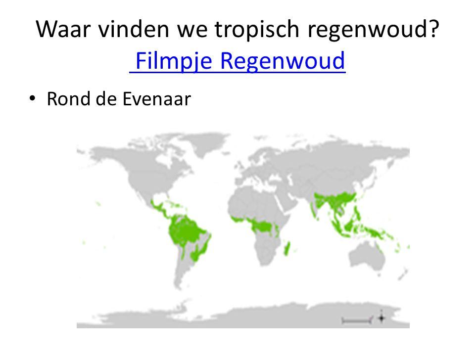 Waar vinden we tropisch regenwoud Filmpje Regenwoud