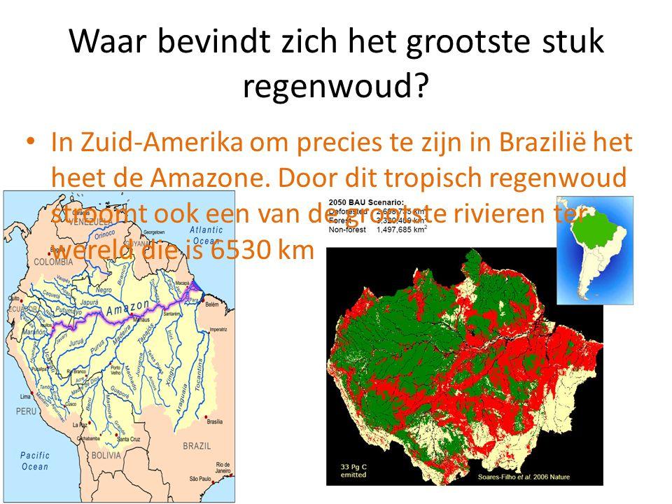 Waar bevindt zich het grootste stuk regenwoud