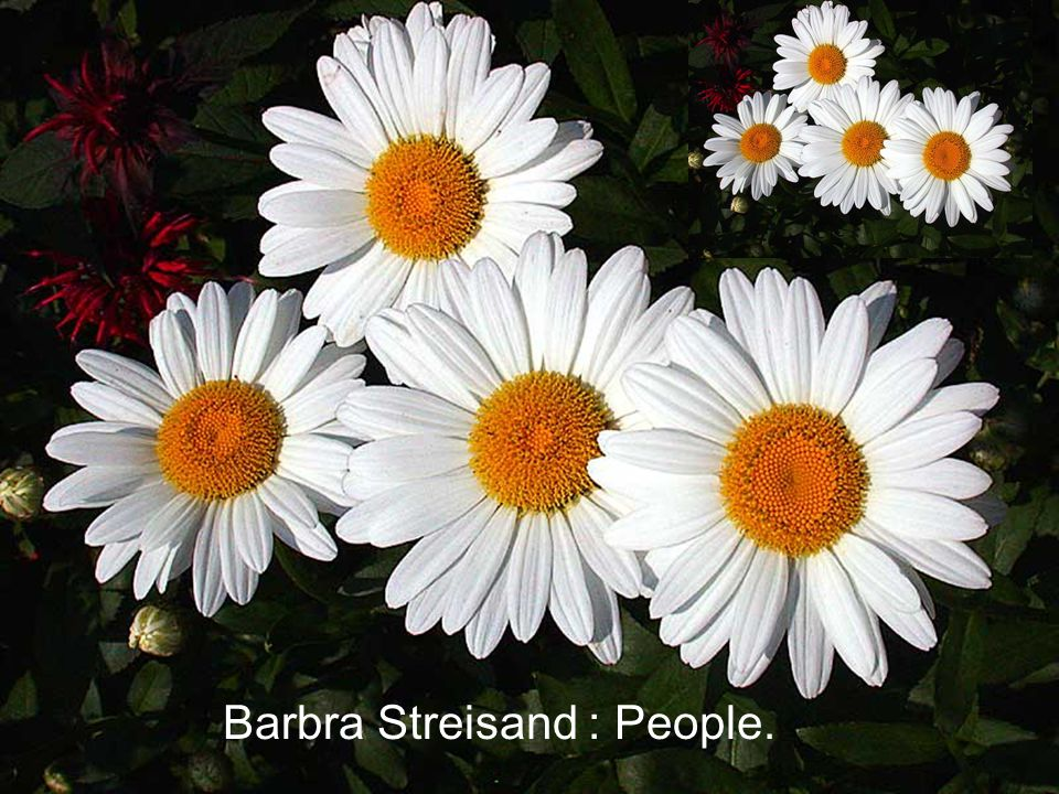 Barbra Streisand : People.