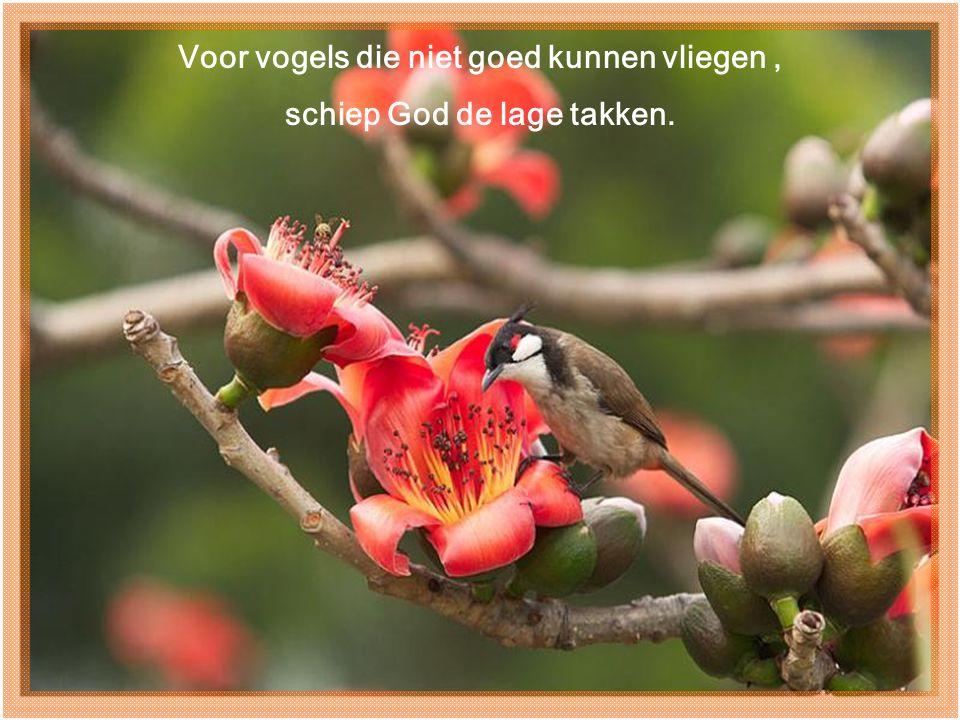 Voor vogels die niet goed kunnen vliegen , schiep God de lage takken.