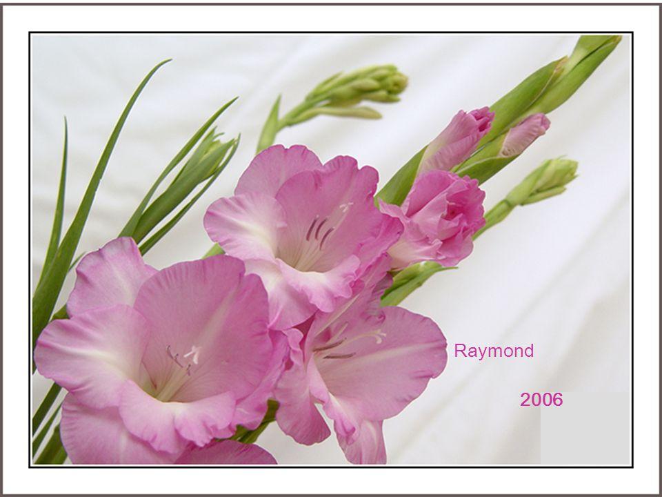 Raymond 2006