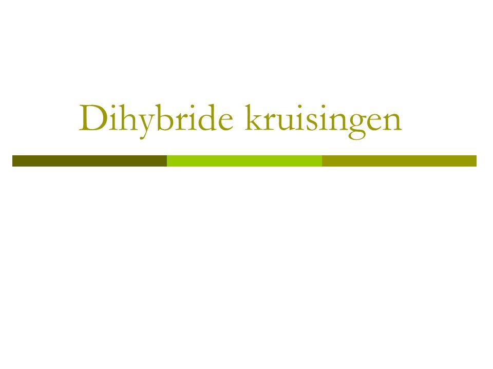 Dihybride kruisingen