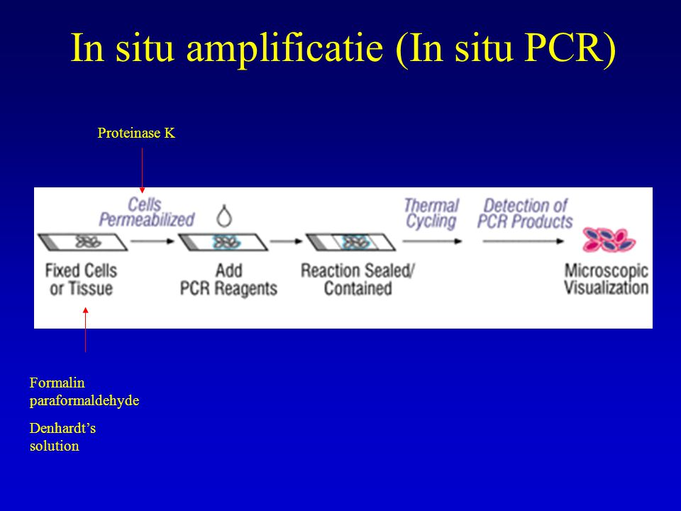 In situ amplificatie (In situ PCR)