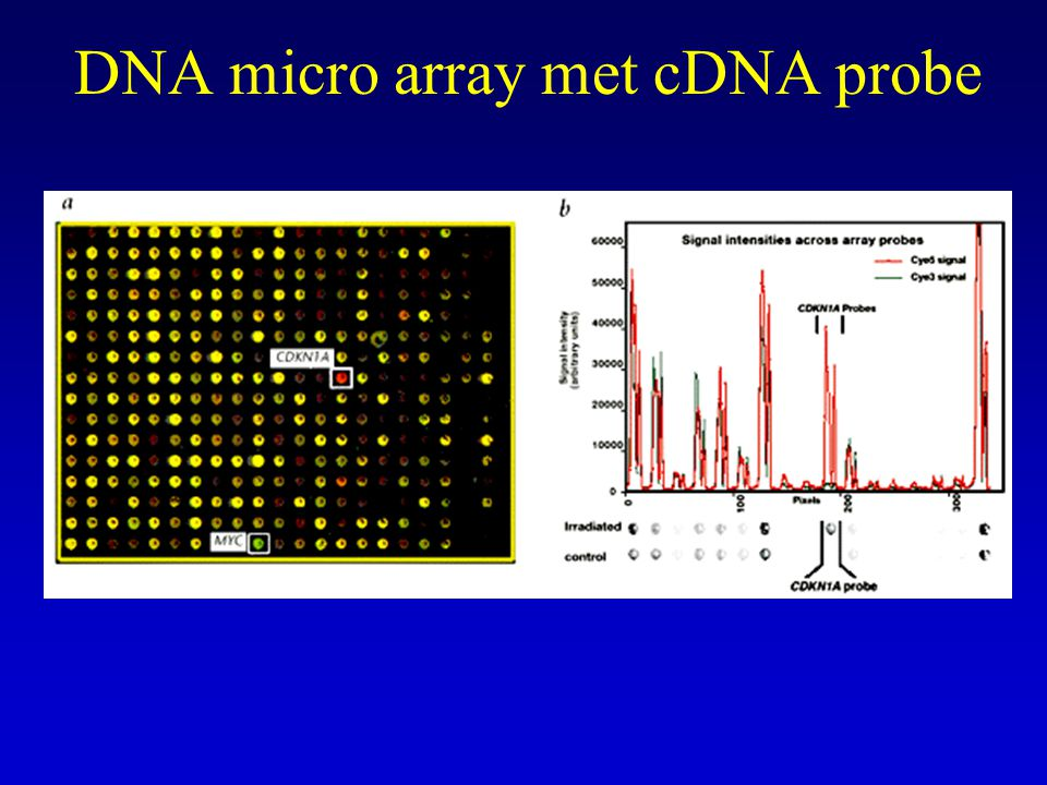 DNA micro array met cDNA probe