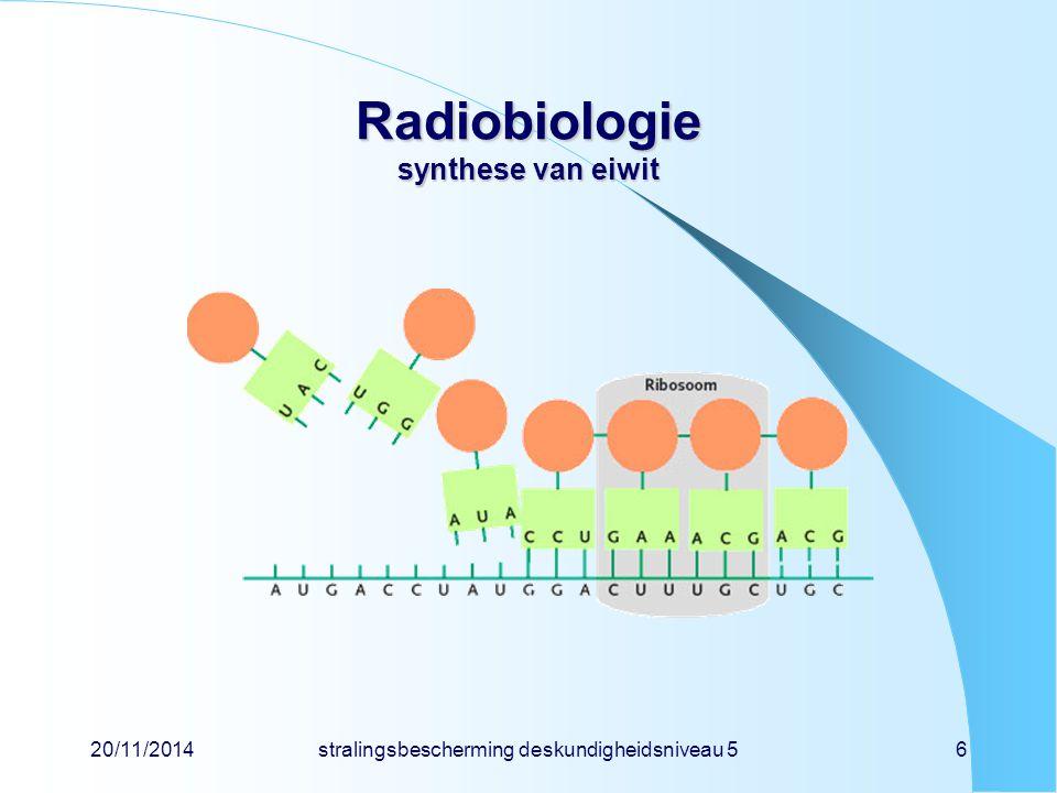 Radiobiologie synthese van eiwit