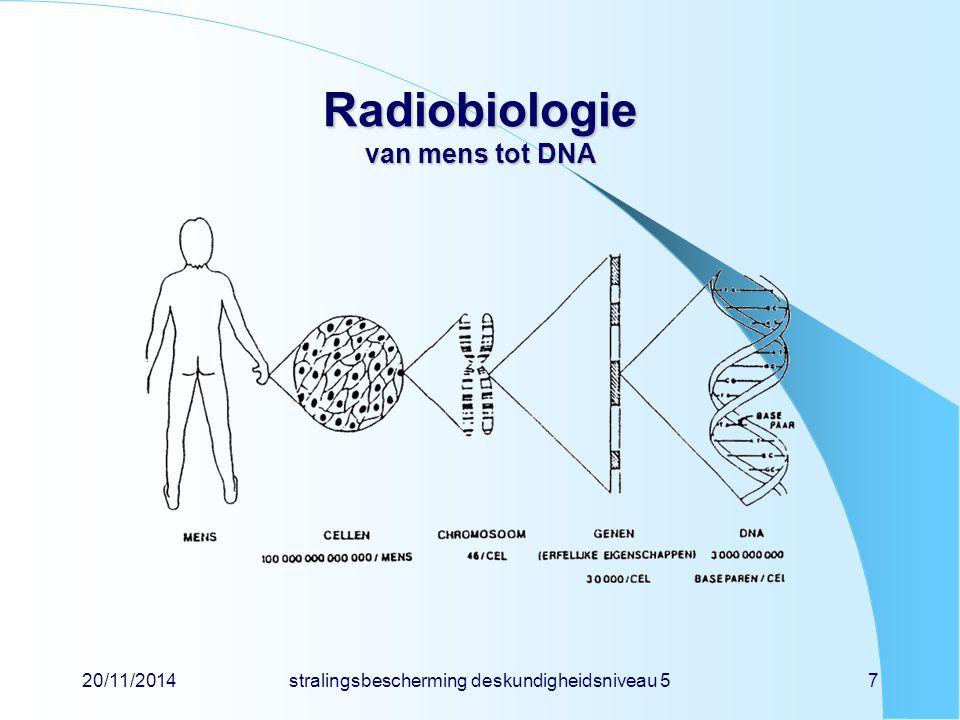 Radiobiologie van mens tot DNA