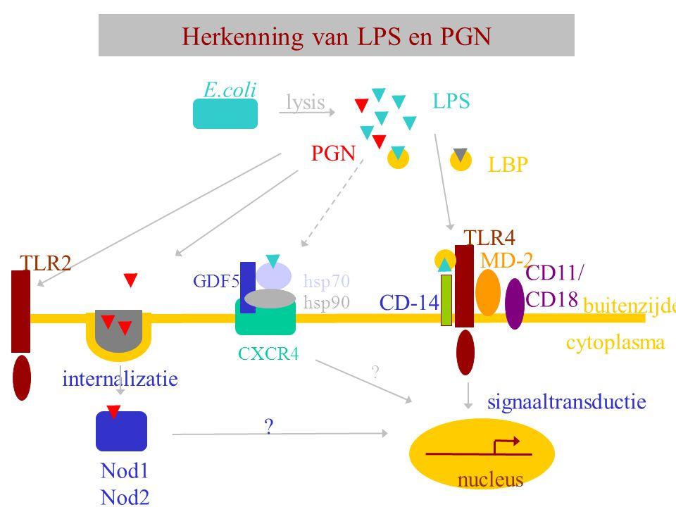 Herkenning van LPS en PGN