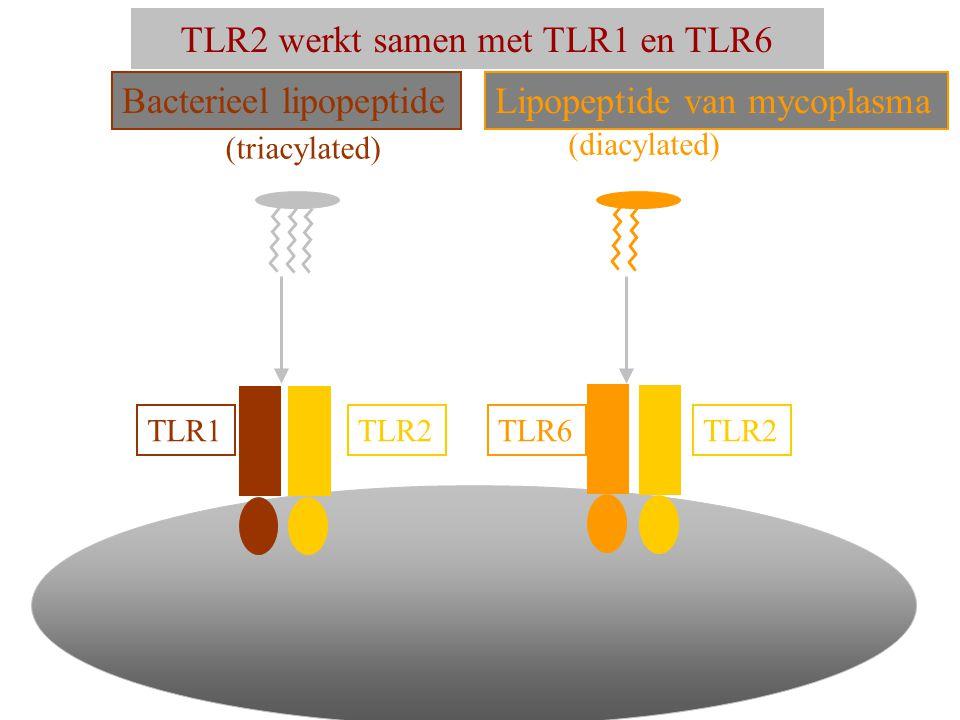 TLR2 werkt samen met TLR1 en TLR6