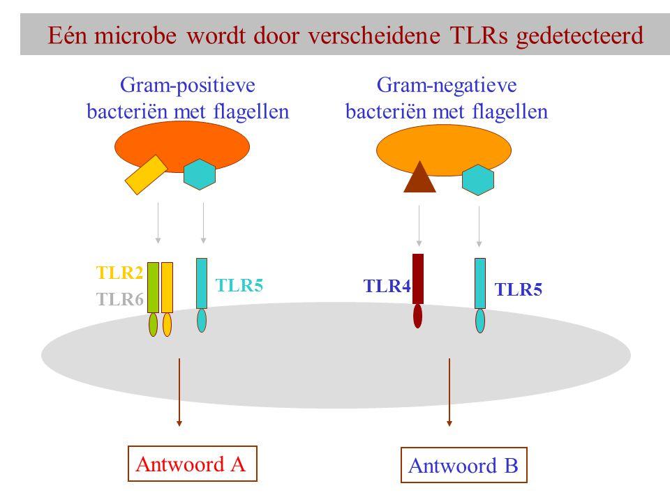 Eén microbe wordt door verscheidene TLRs gedetecteerd
